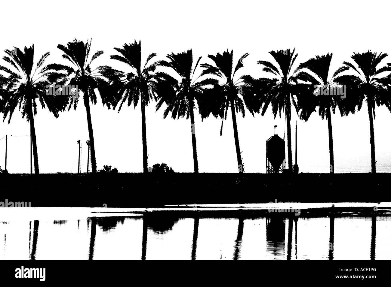 Israel Galilee silhouette of palm trees with a Fish breeding pool in the foreground in black and white - Stock Image