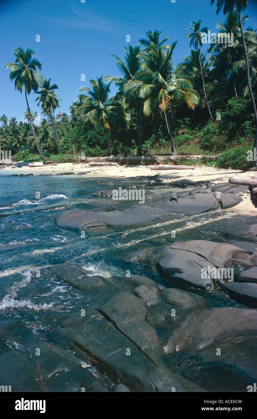 palmtrees at coastline andaman islands andaman and nicobar islands union territory india - Stock Image