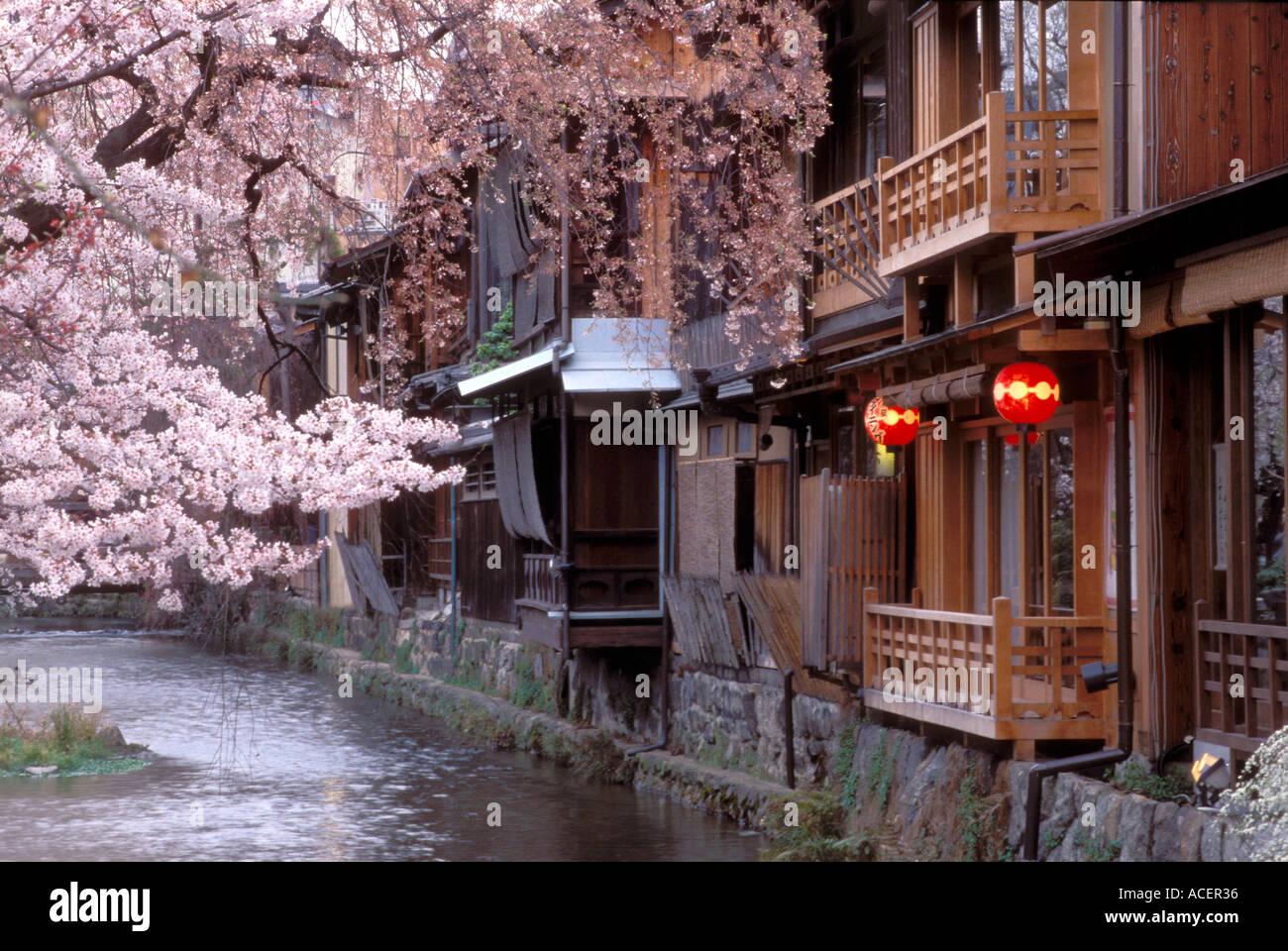 Old town houses and blossoming cherry trees beside Shirakawa River in historic Gion district of Kyoto - Stock Image