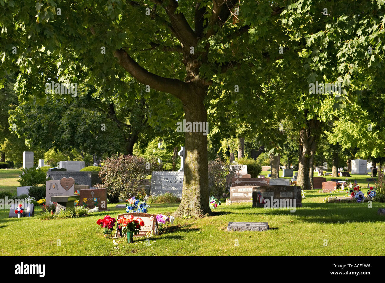 STREET SCENE Chicago Illinois Graves under tree in Rosehill Cemetery largest cemetery in Chicago - Stock Image