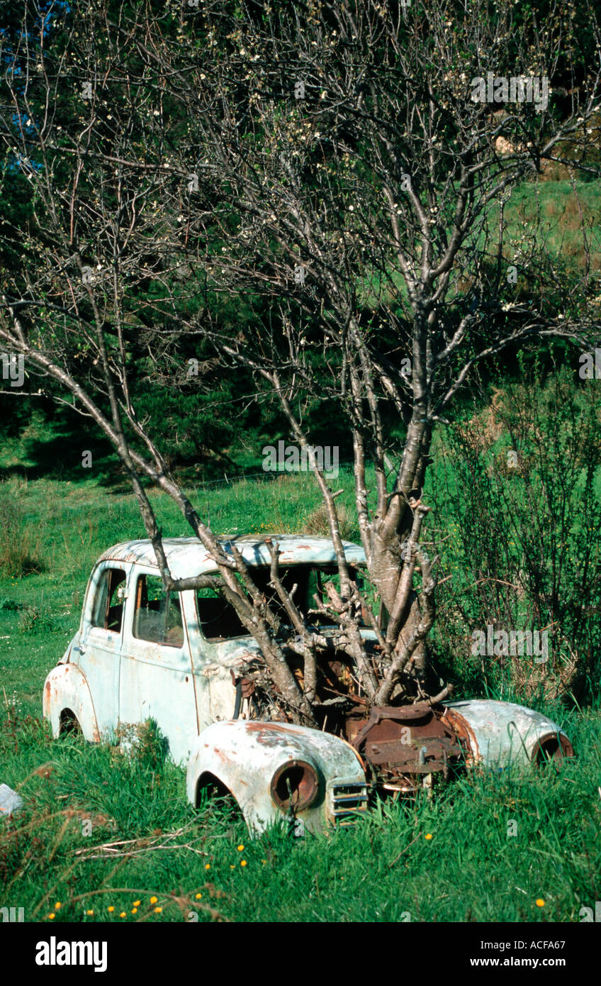 nature beats commerce tree growing through a car at Picton South Island New Zealand Stock Photo