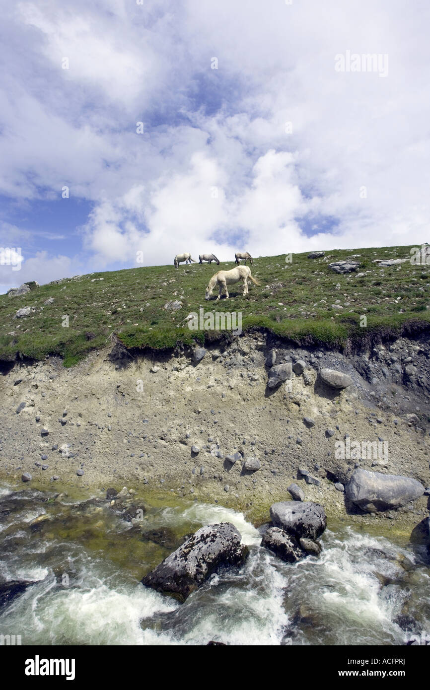 Burren horses on the west coast of Ireland Burren way - Stock Image