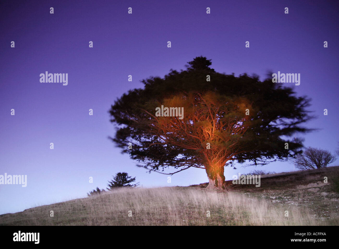 Photo of a tree lit up at night - Stock Image