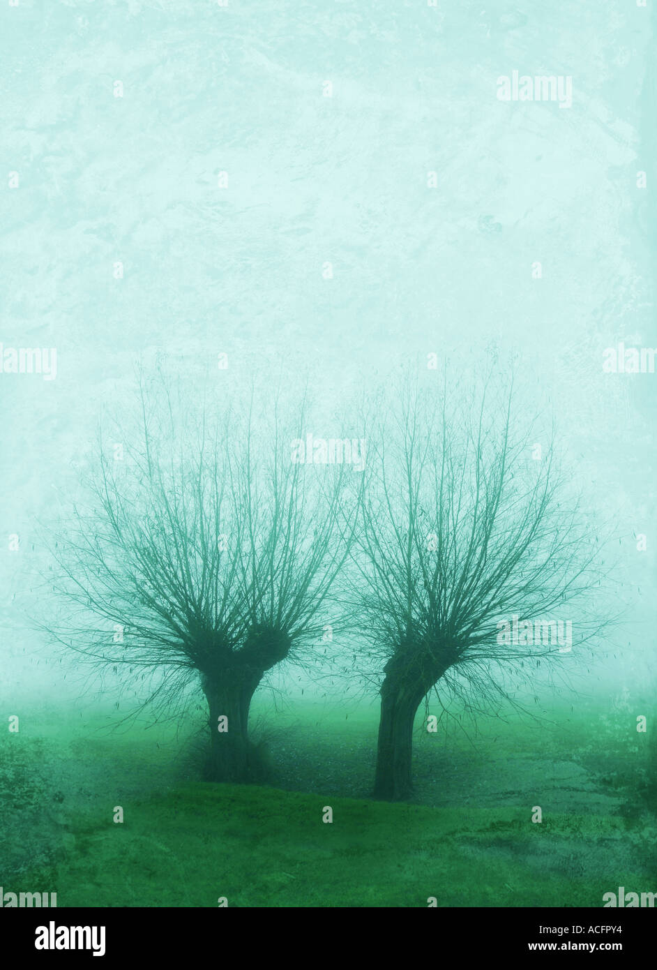 Photo of two willow trees in the mist - Stock Image