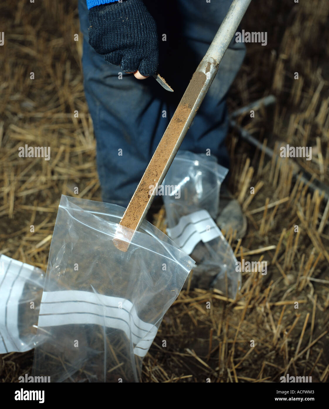 Researcher taking manual soil core sample with metal corer - Stock Image