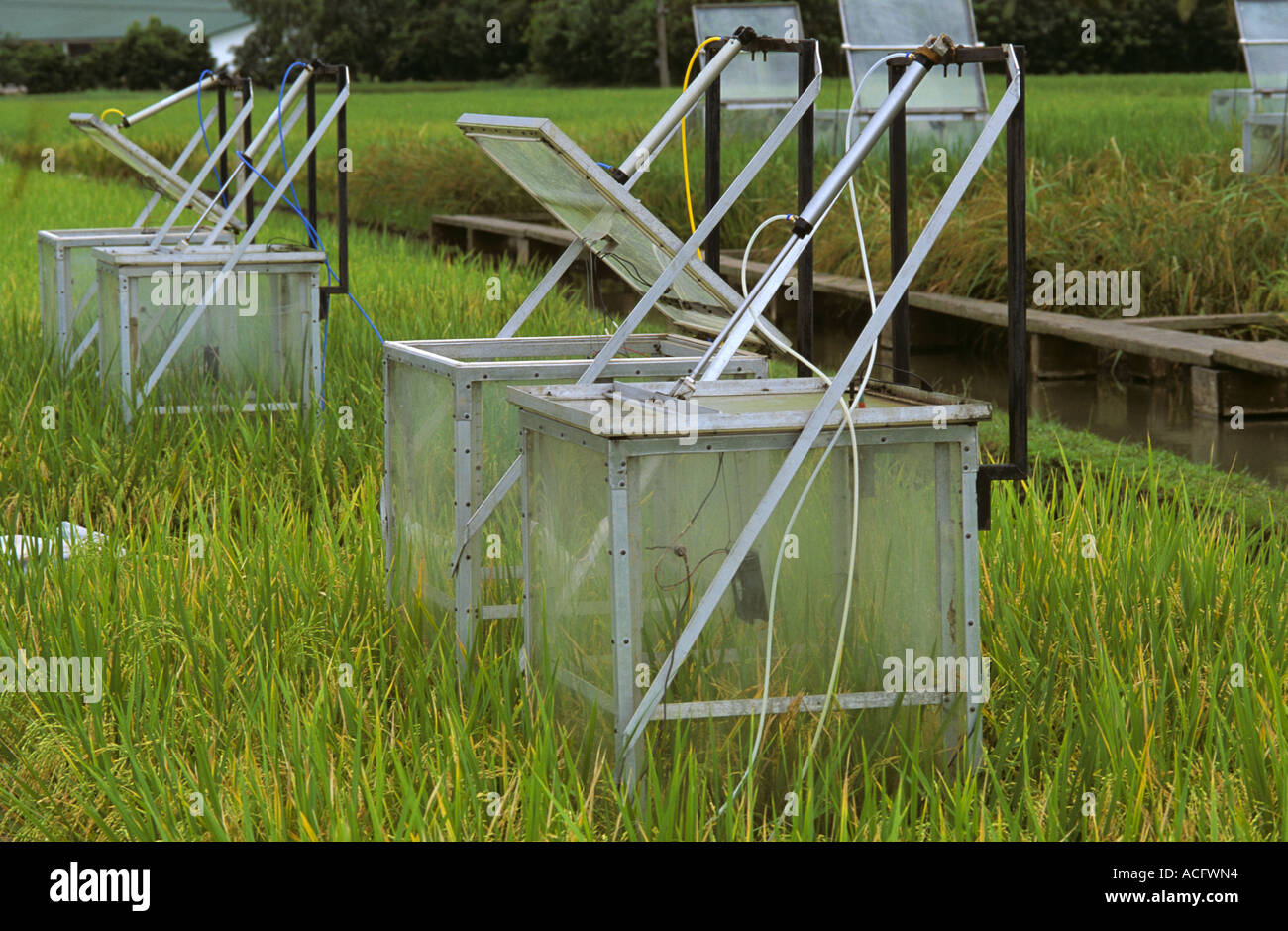 Chambers to measure methane emissions from rice paddies in the Philippines - Stock Image