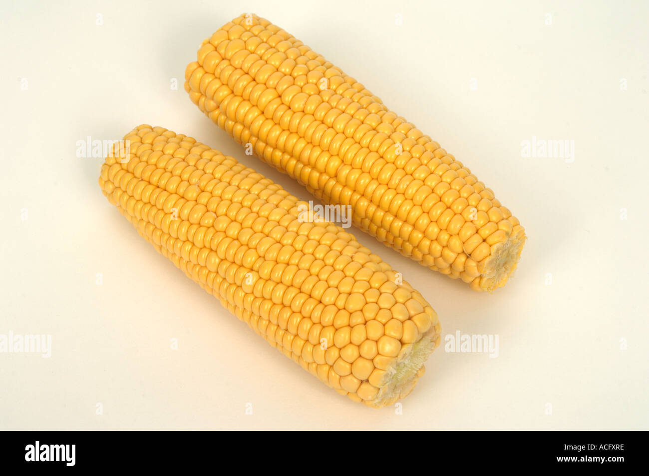 Vegetable produce typical supermarket bought cut trimmed sweetcorn cobs - Stock Image
