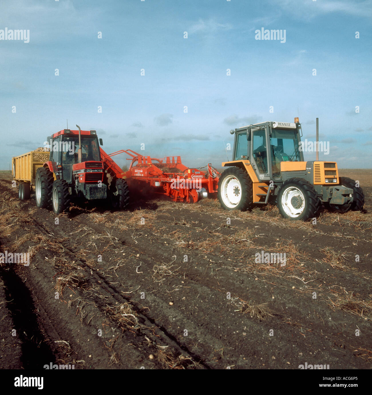 Renault tractor and Grimme harvester elevating a Fenland potato crop - Stock Image