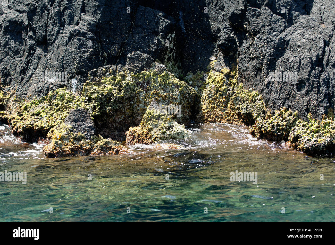 Water line with larval rocks and seaweed and algae clear Mediterranean water Corsica - Stock Image