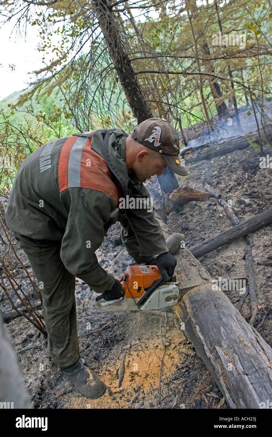 A forest fire fighter patrolling an extinguished forest fire cuts a still smouldering root from a felled tree - Stock Image