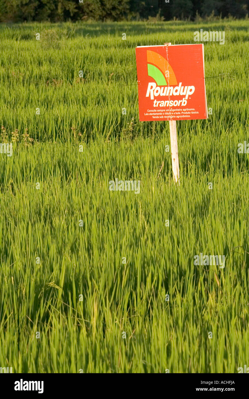 Monsanto ROUND UP pesticide sign board in field of Genetically Modified rice in Brazil Farming  GMO - Stock Image