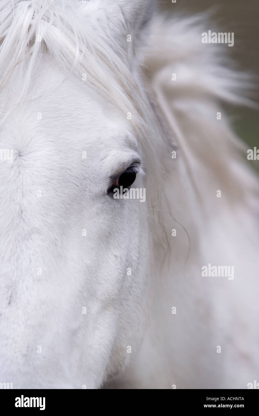 Horse with white coat stock image
