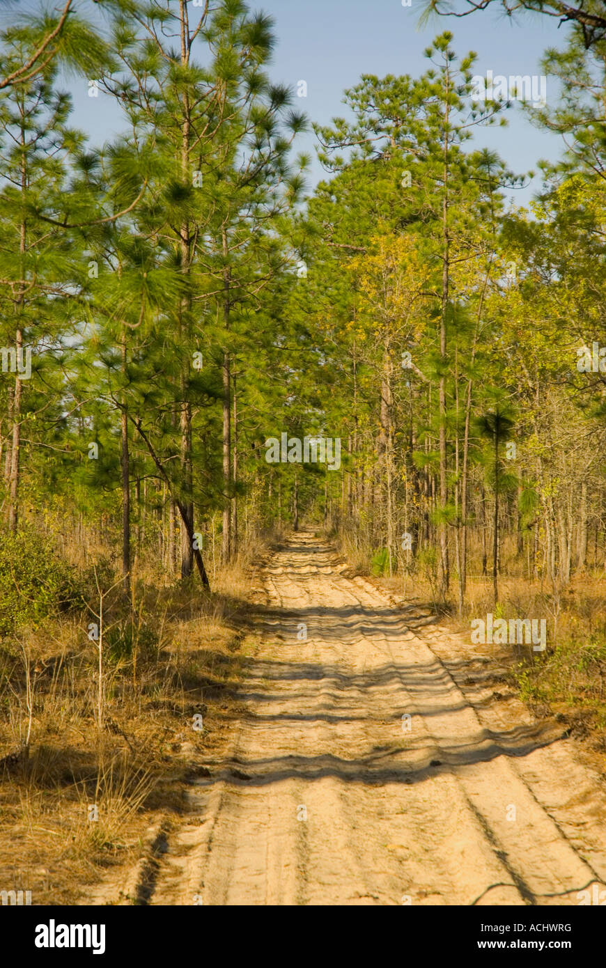 Sand forest road Gold Head Branch State Park Florida sand road through foreest - Stock Image