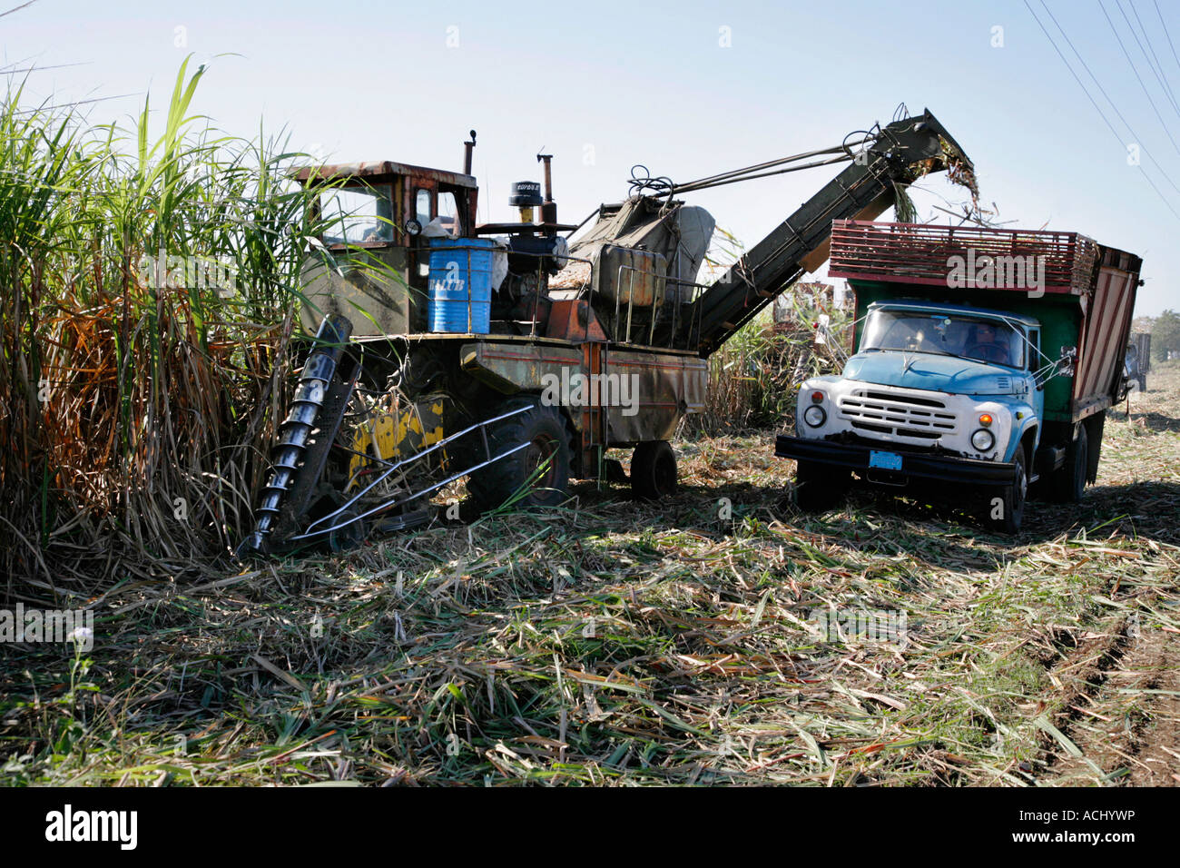 Sugarcane harvest in Cuba - Stock Image