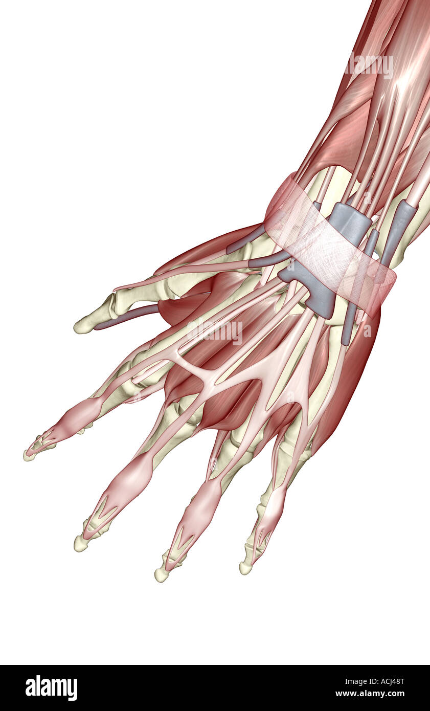 Pollicis Stock Photos & Pollicis Stock Images - Alamy