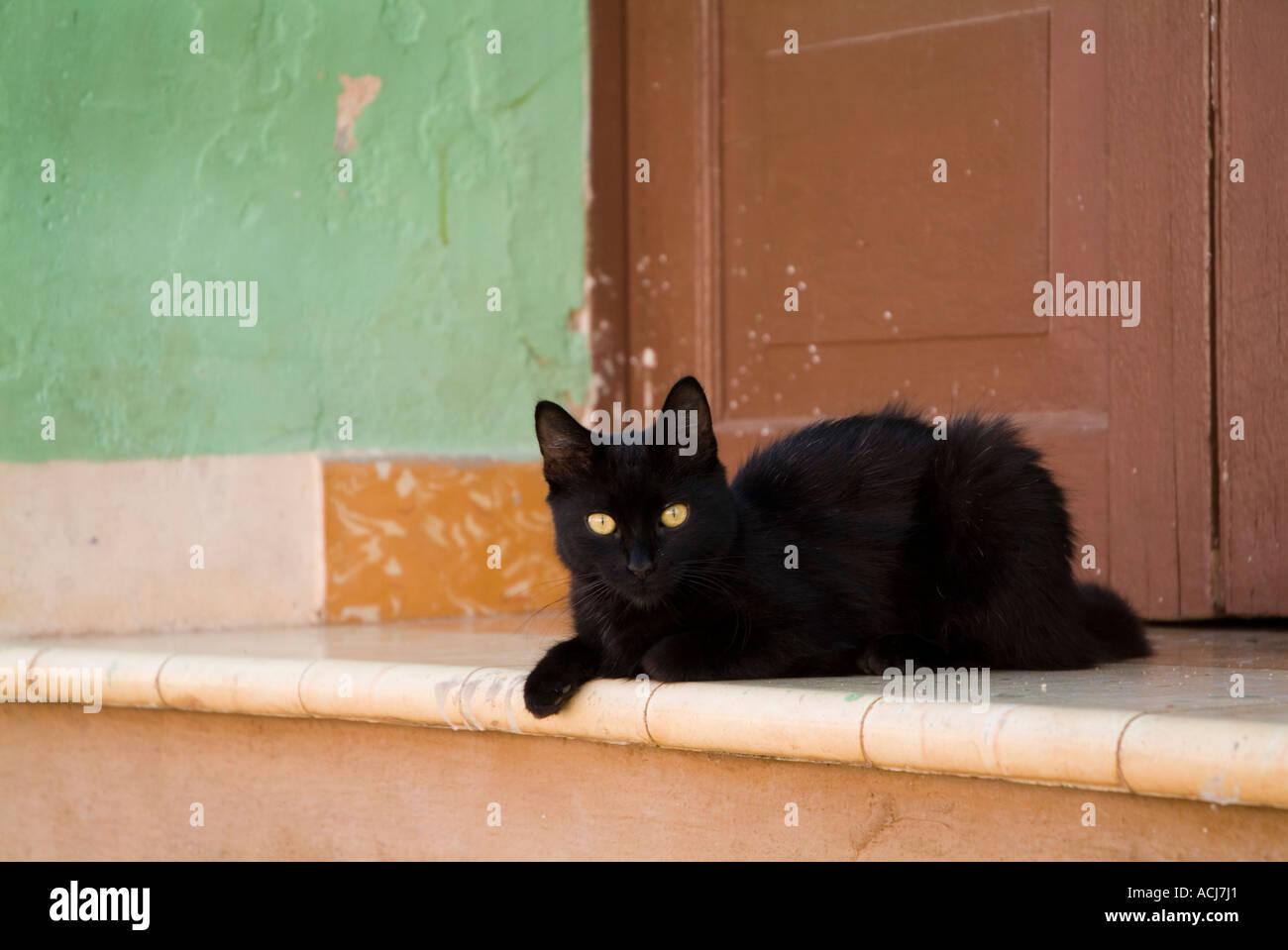 Black cat lying on a doorstep in Trinidad, Cuba. - Stock Image
