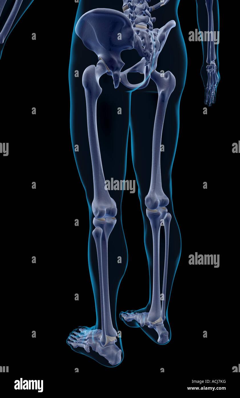 Lower Back Bone Stock Photos Lower Back Bone Stock Images Page 3
