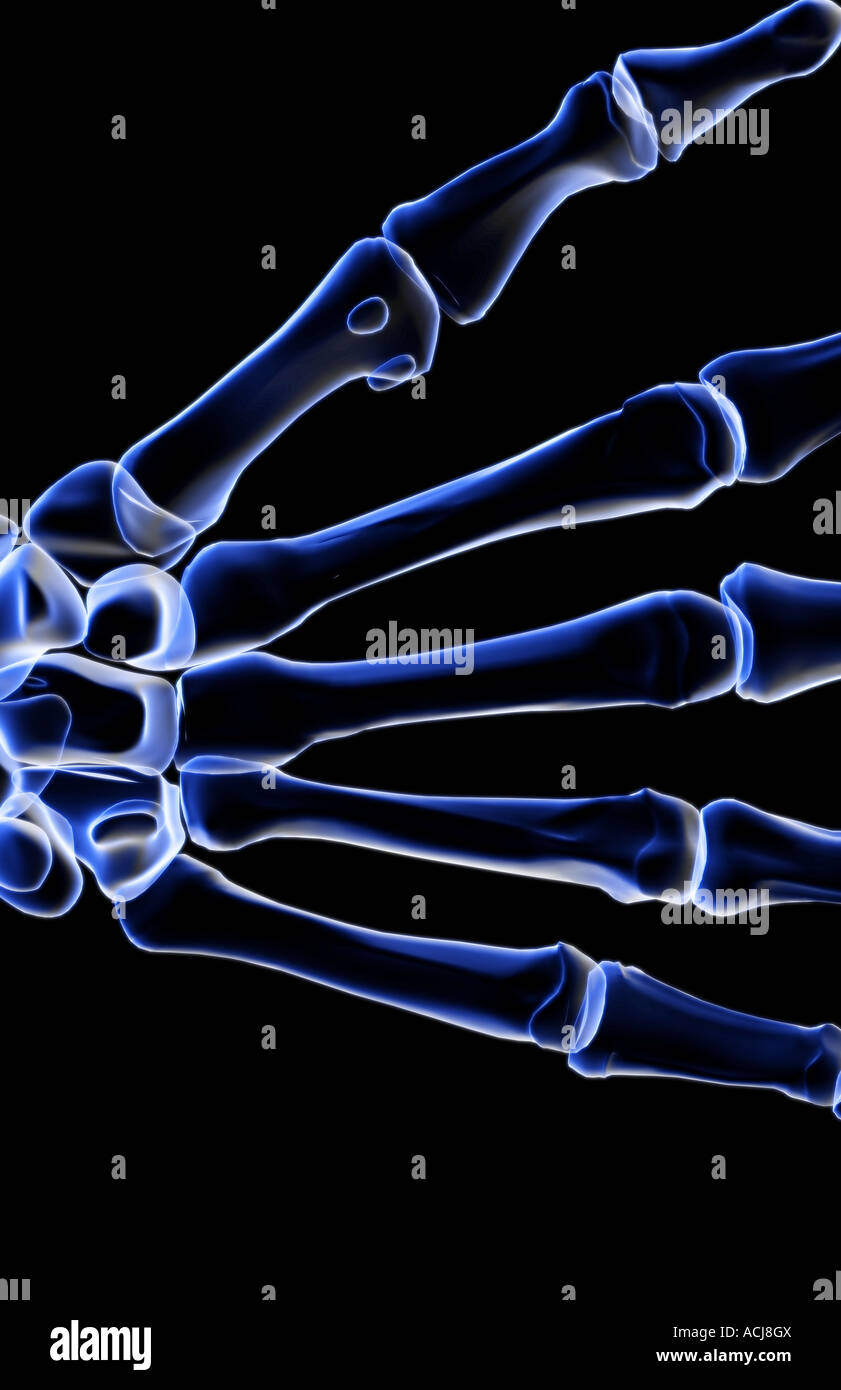 The bones of the hand - Stock Image
