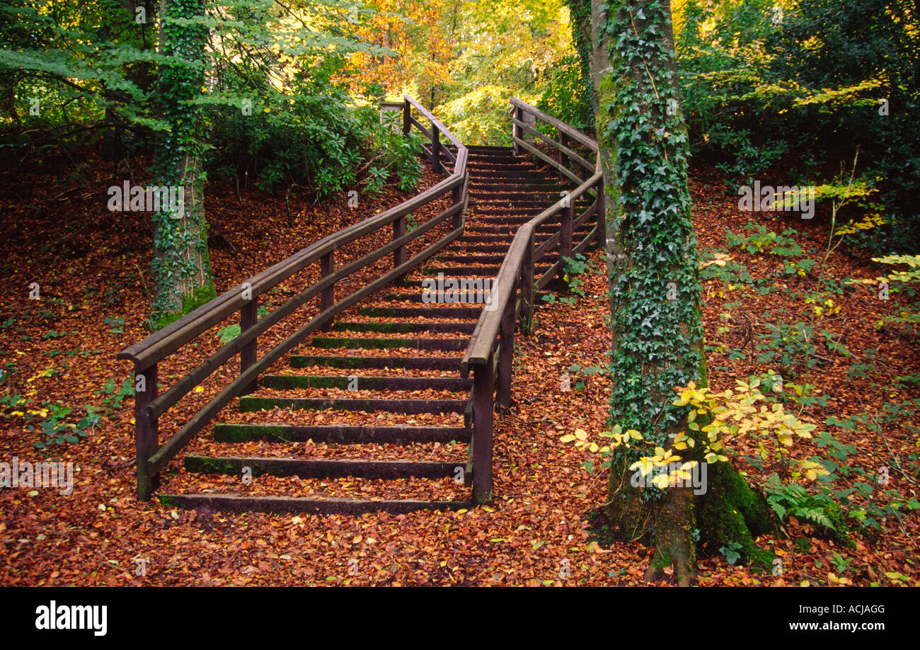 Autumn stairway, Castlecaldwell Forest Park, County Fermanagh, Northern Ireland. - Stock Image