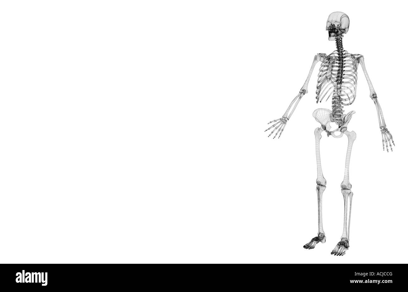 Anatomy Skeletal System Black And White Stock Photos Images Alamy