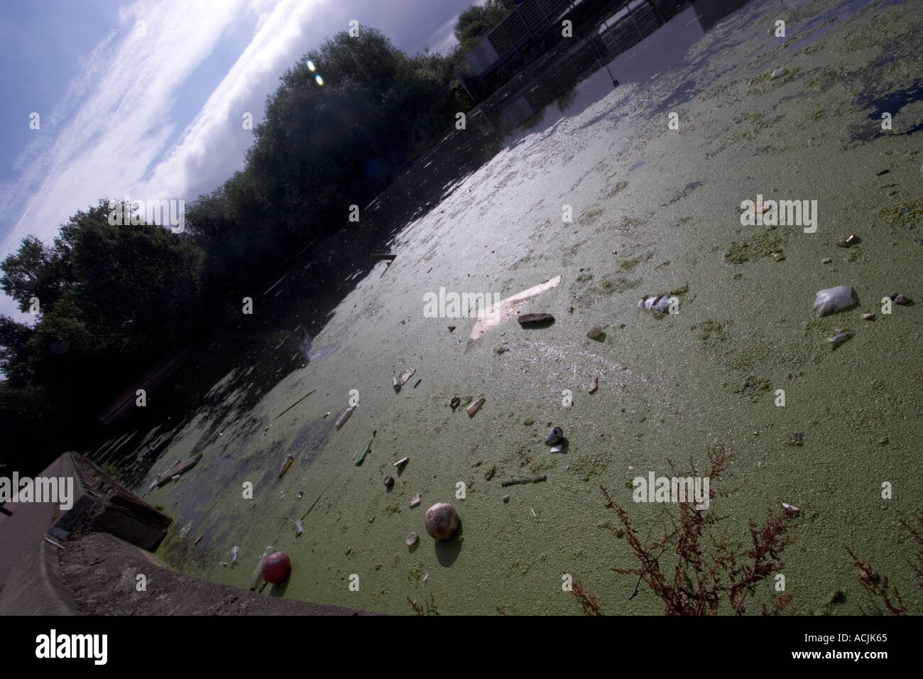 Polluted river with Algae alga litter trash and rubbish on the River Lea Lee navigation Clapton - Stock Image