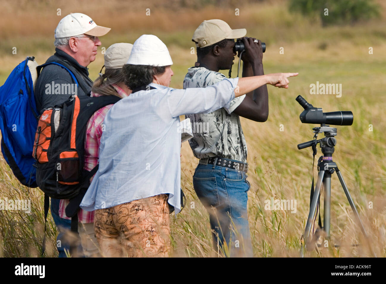 Guide looks for different species to show visiting bird watchers grassland mudflats near Tendaba Camp on Gambia - Stock Image