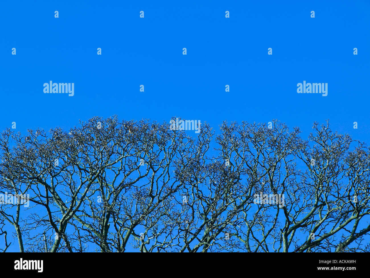 Tree branches and Blue Sky - Stock Image