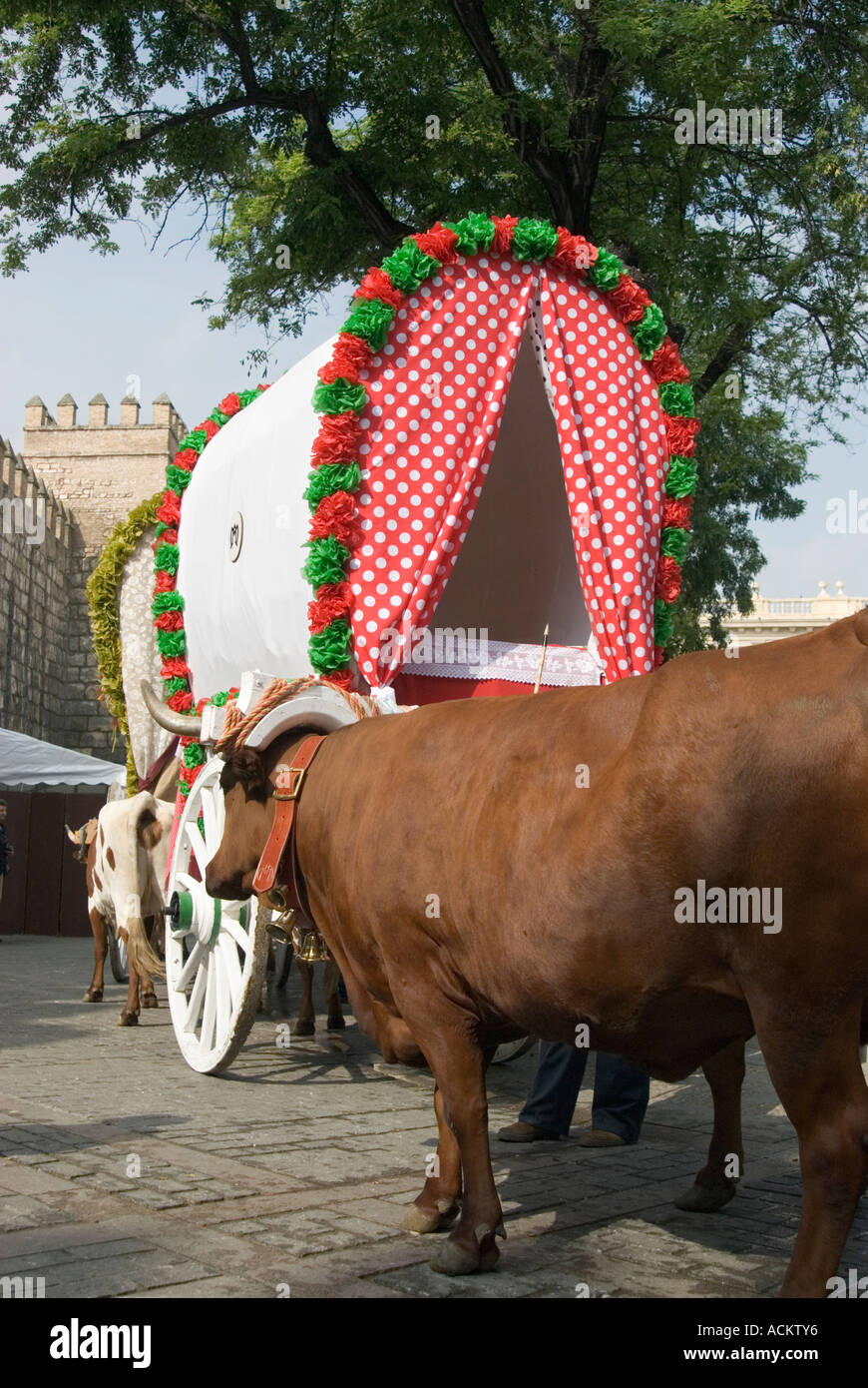 Oxen pulling decorated waggons on annual Romeria del Rocio Andalucía Spain - Stock Image
