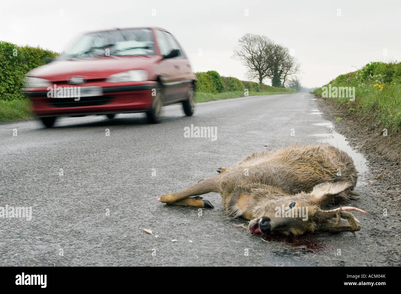 Injury Killed Hit Traffic Sad Countryside Stock Photos & Injury ...