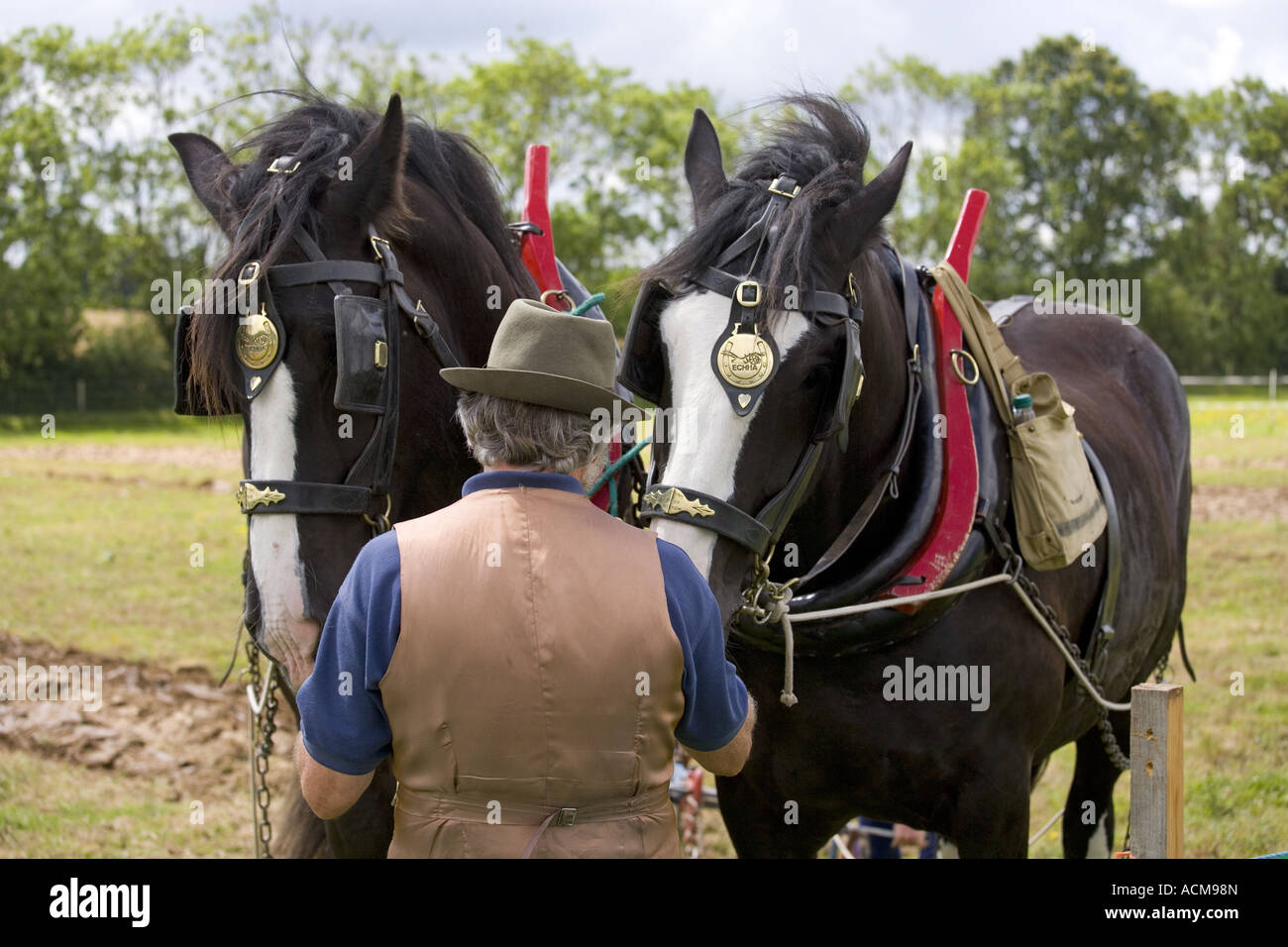 a pair of Shire Horses & Groom at countryside ploughing match - Stock Image