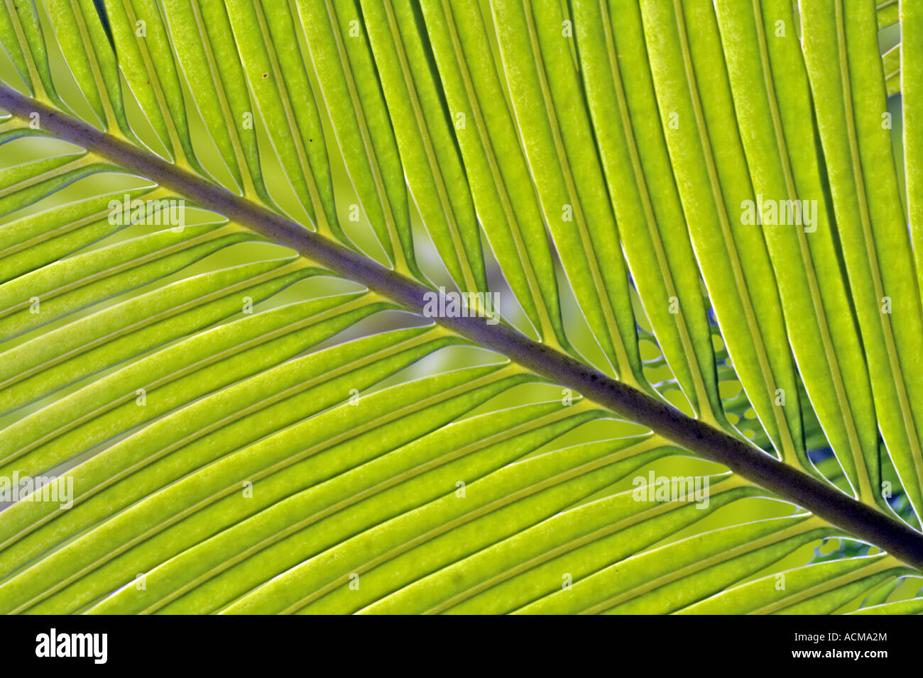 Green Leaf In Budapest The  Capital Of Hungary - Stock Image
