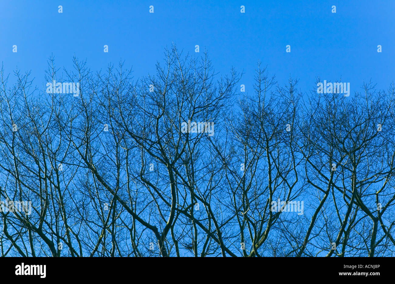 Tree branches against blue sky - Stock Image