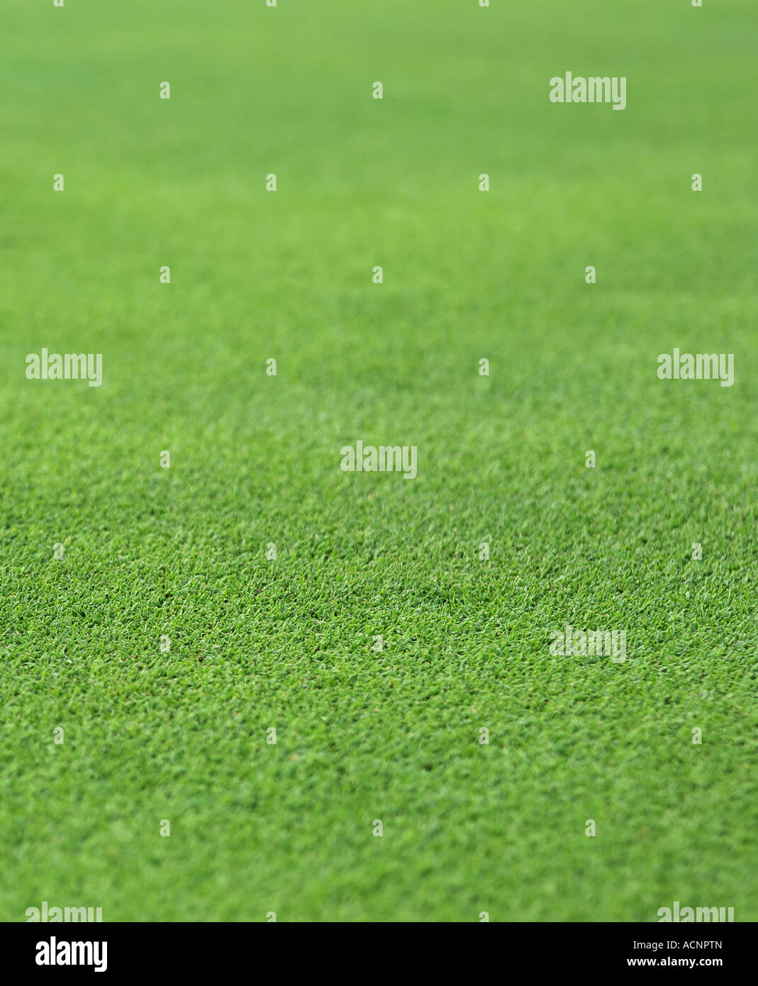 the finely manicured green grass or turf from a golf hole green - Stock Image
