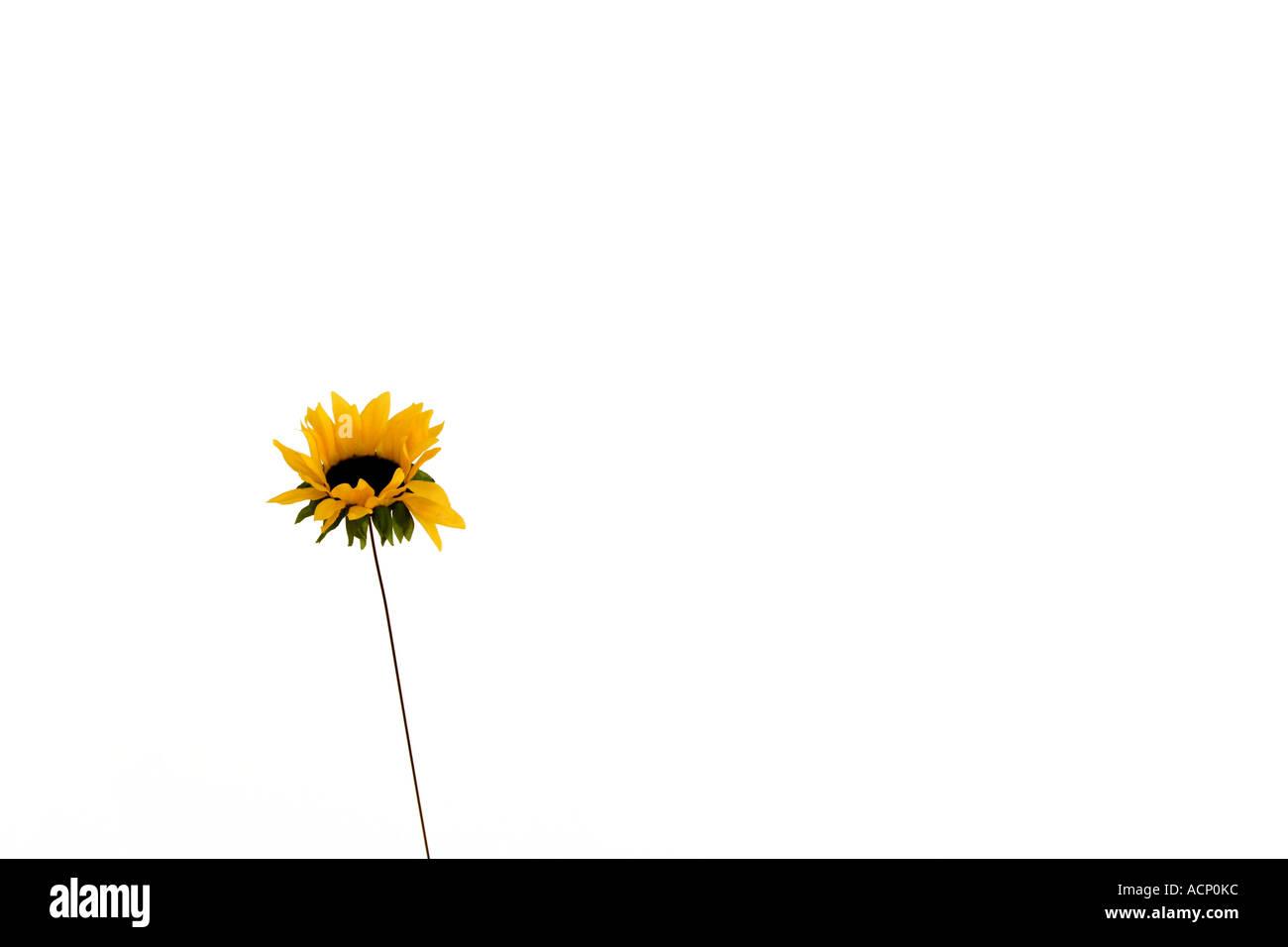 Flower - Freigestellte Blume - Stock Image