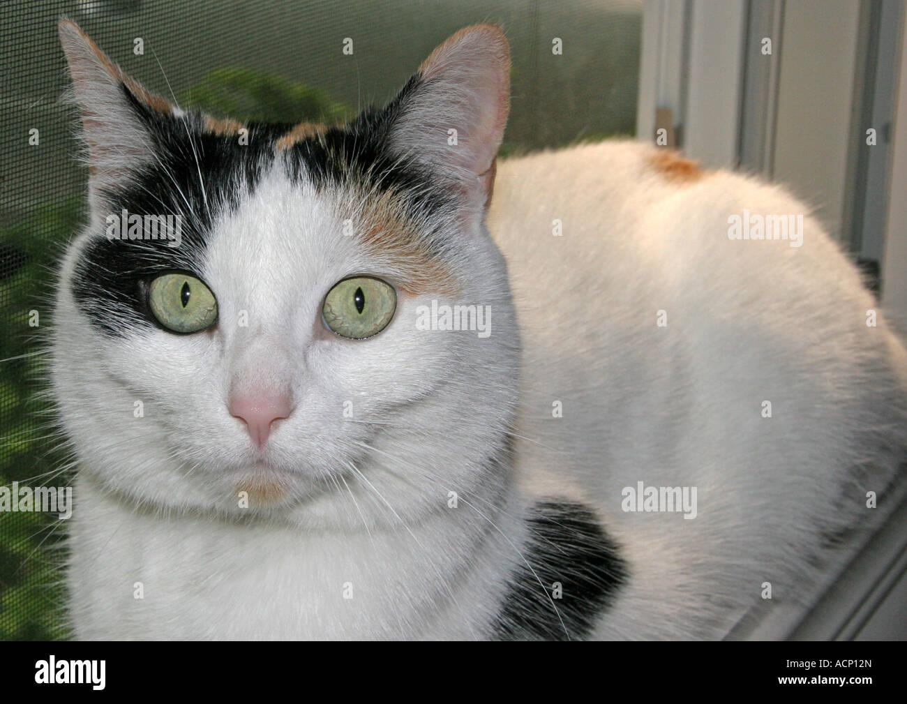 Cat Shock Stock Photos & Cat Shock Stock Images - Alamy