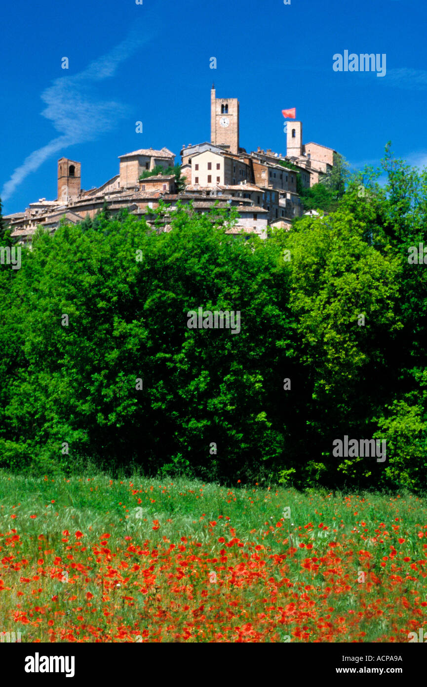 Typical wild poppies of the fields near Sarnano in Le Marche,Italy Stock Photo