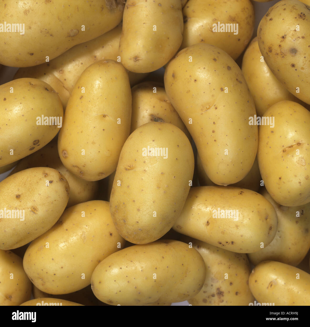 New Charlotte potatoes tubers post harvest and shop bought - Stock Image
