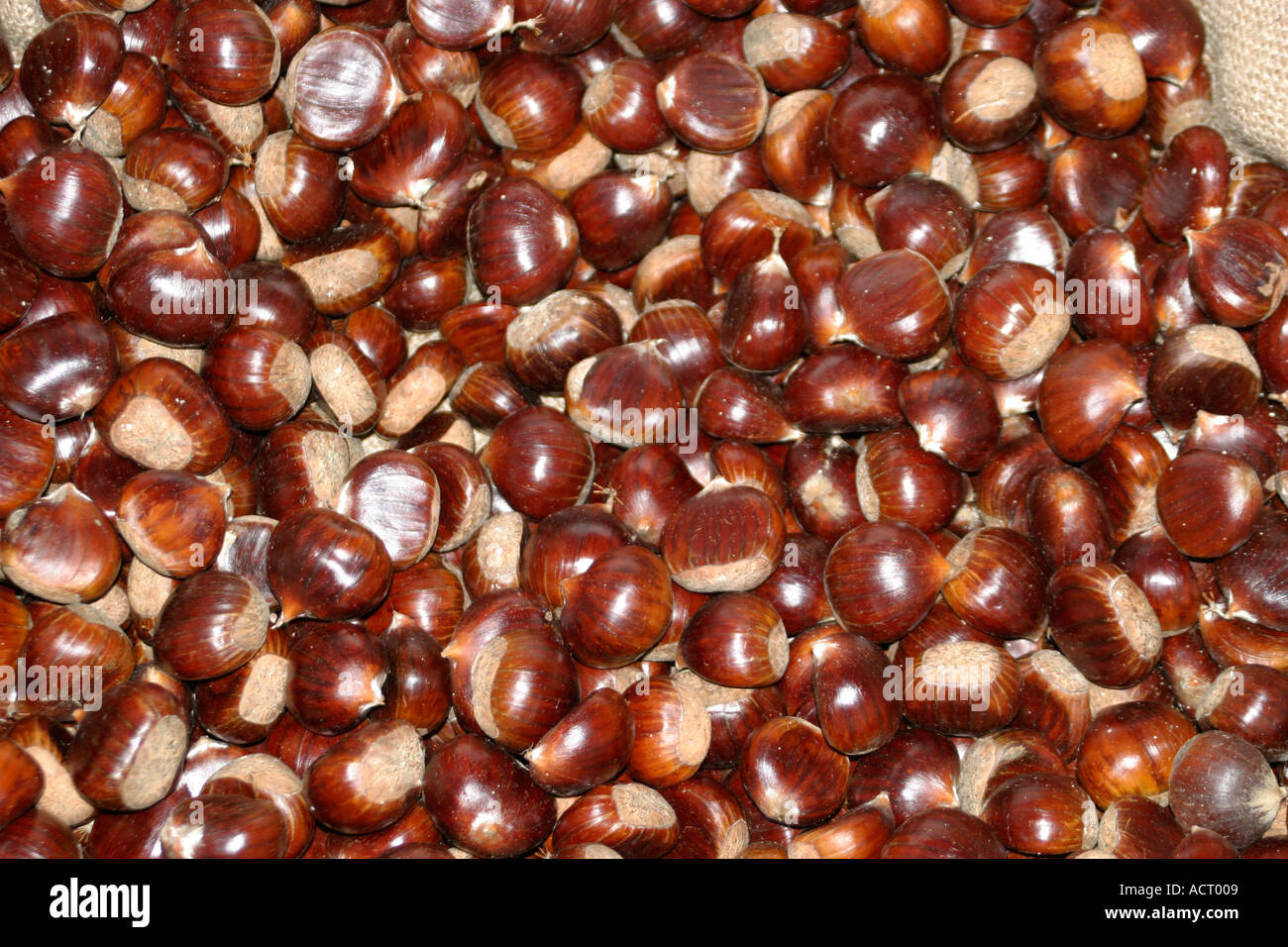 massed chestnuts at a Castagna festival in Le Marche, Italy Stock Photo