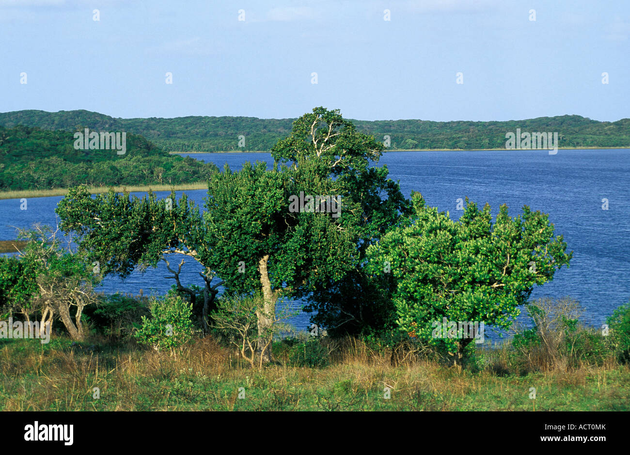 View Of Mgobezeleni Lake With African Mangosteen Garcinia Stock