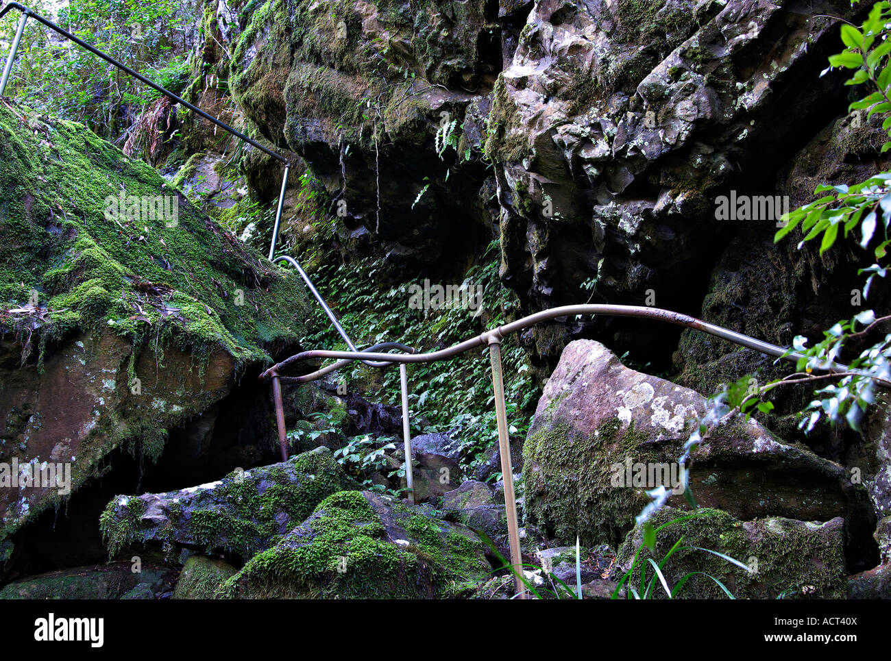 the perilous path through the oxly world heritage rainforest Stock Photo