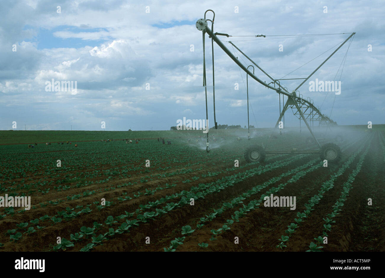 A centre pivot irrigation system irrigating a field of cabbage Near Bronkhorstspruit Gauteng South Africa - Stock Image