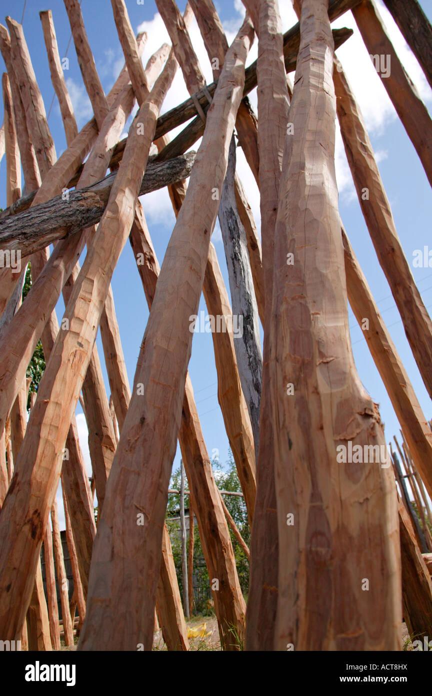 A log yard selling Lebombo Ironwood Androstachys johnsonii