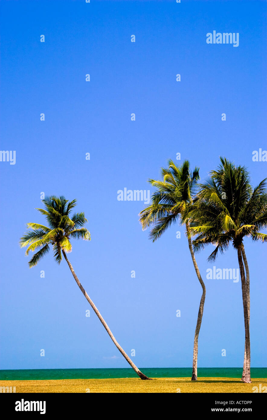 tilted palm trees - Stock Image