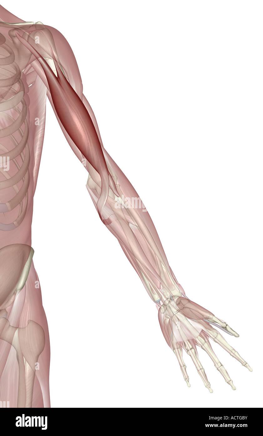 Berühmt Halslymphknoten Anatomie Zeitgenössisch - Anatomie Ideen ...