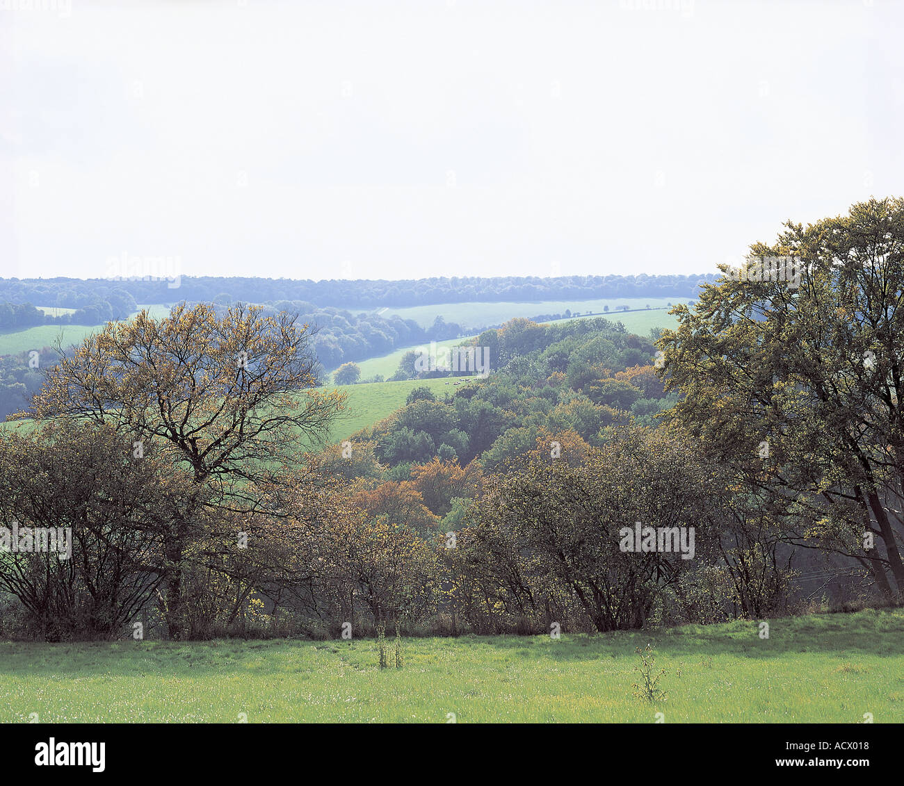 View of The Northern Chilterns from The Ridgeway - Stock Image