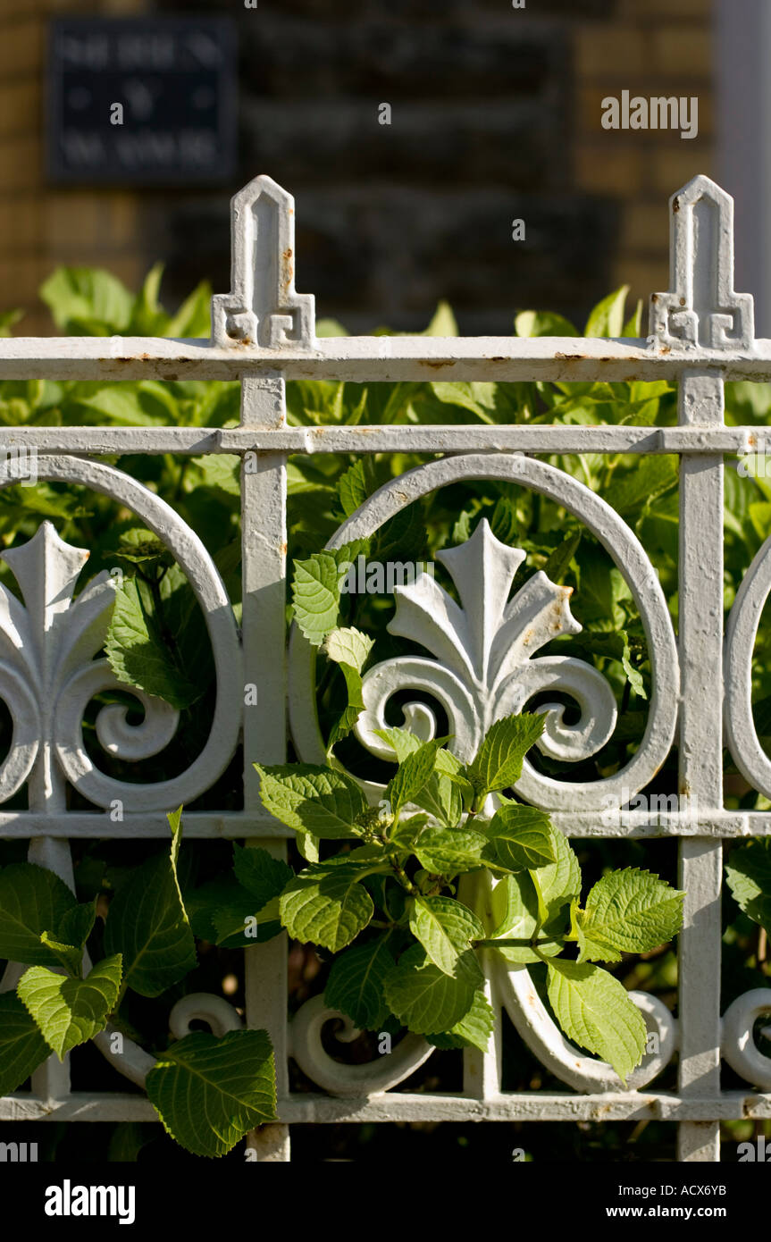 victorian iron railings and green vines - Stock Image