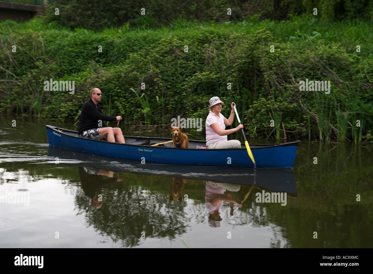 man and woman paddling a canadian type canoe on the Grand Western Canal, Tiverton, England. - Stock Image