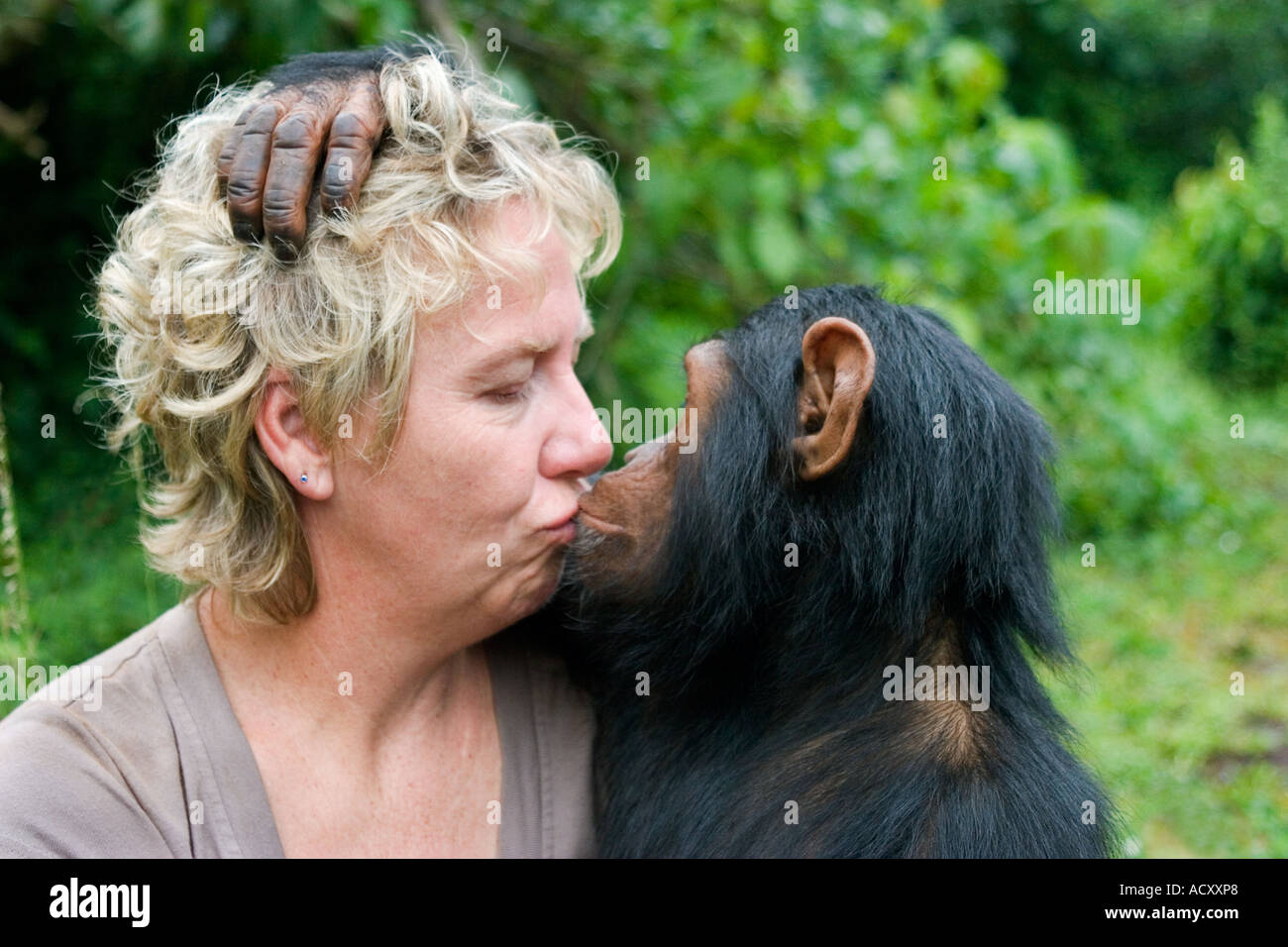 debbie-cox-of-the-jane-goodall-institute-with-loving-chimpanzee-protected-ACXXP8.jpg
