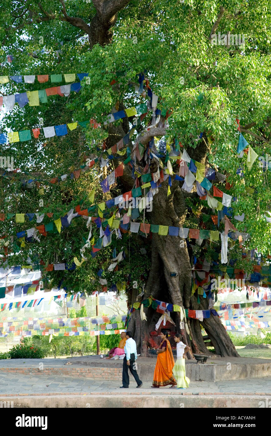 Birth Place Of Buddhism Bihar India: Gautama Buddha Bodhi Tree Stock Photos & Gautama Buddha