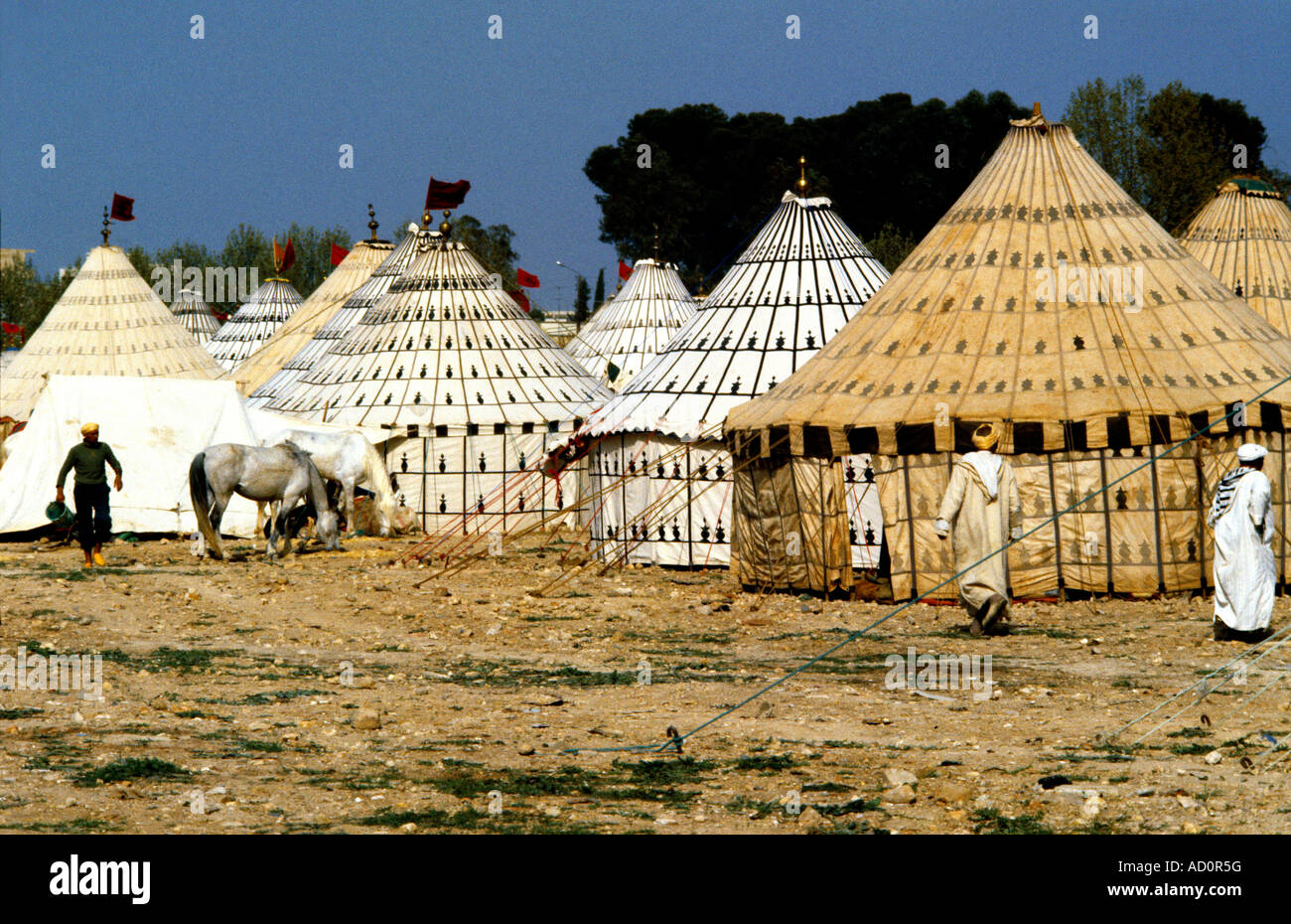 fez jedid morocco berber tent men horse stock photo 13266795 alamy